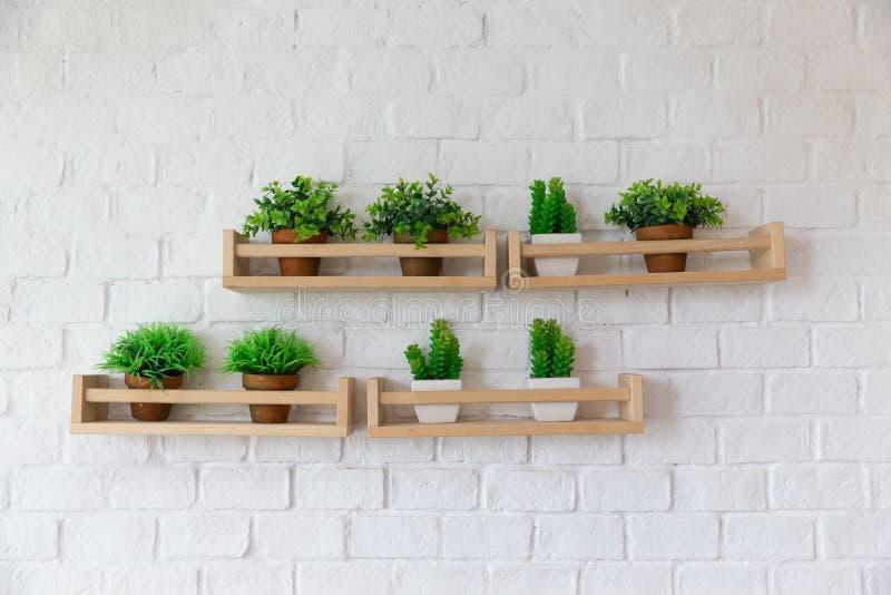 Pequeños potes de la planta colocados en estante de madera en la pared blanca del birck imagen de archivo libre de regalías