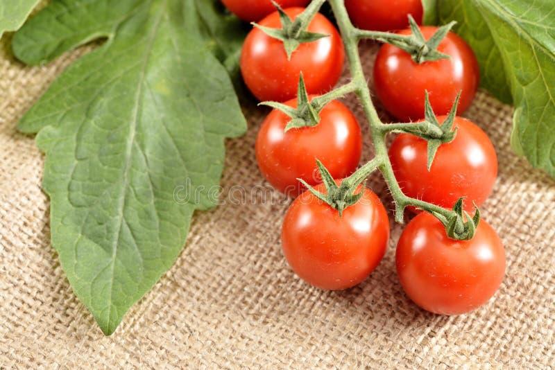 Pequeños tomates de cereza foto de archivo
