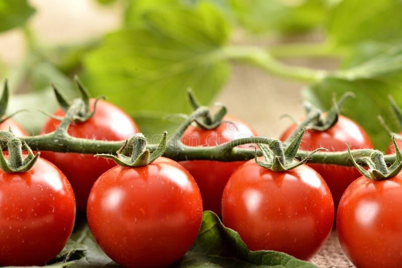 Pequeños tomates de cereza imagenes de archivo