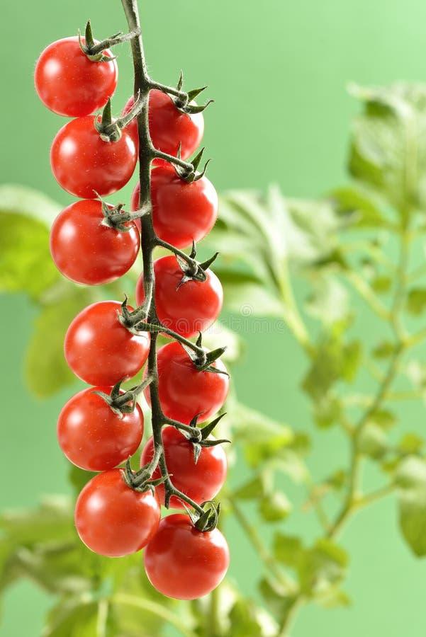 Pequeños tomates de cereza fotografía de archivo libre de regalías