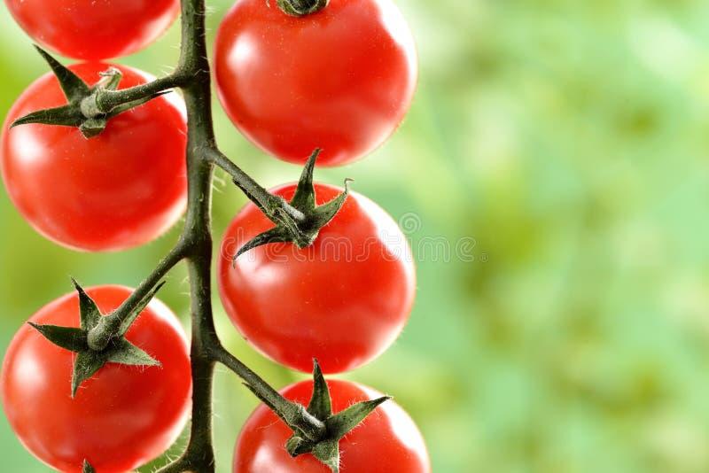 Pequeños tomates de cereza fotografía de archivo