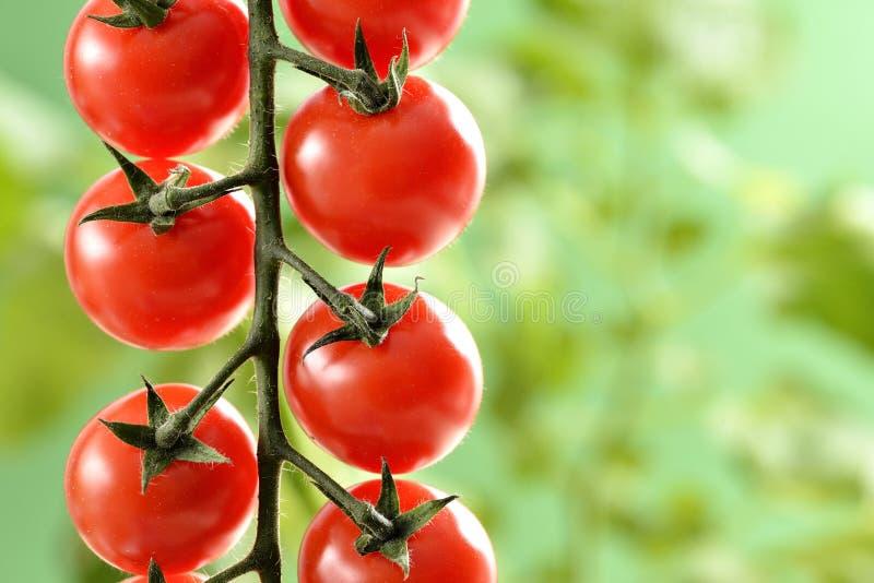 Pequeños tomates de cereza fotos de archivo