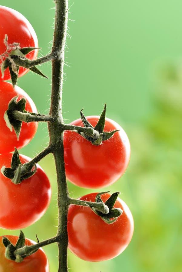 Pequeños tomates de cereza foto de archivo libre de regalías