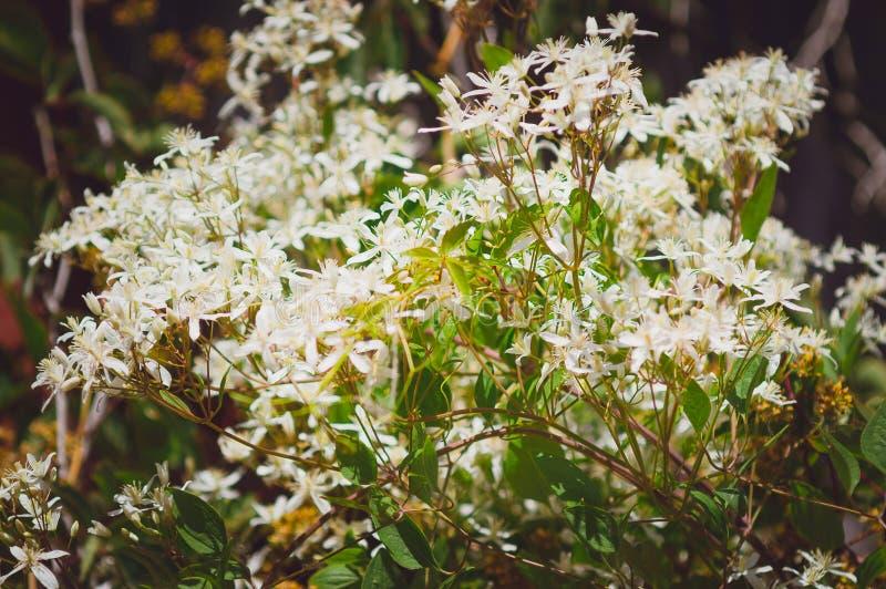 Peque?as flores blancas Contexto hermoso del verano fotografía de archivo