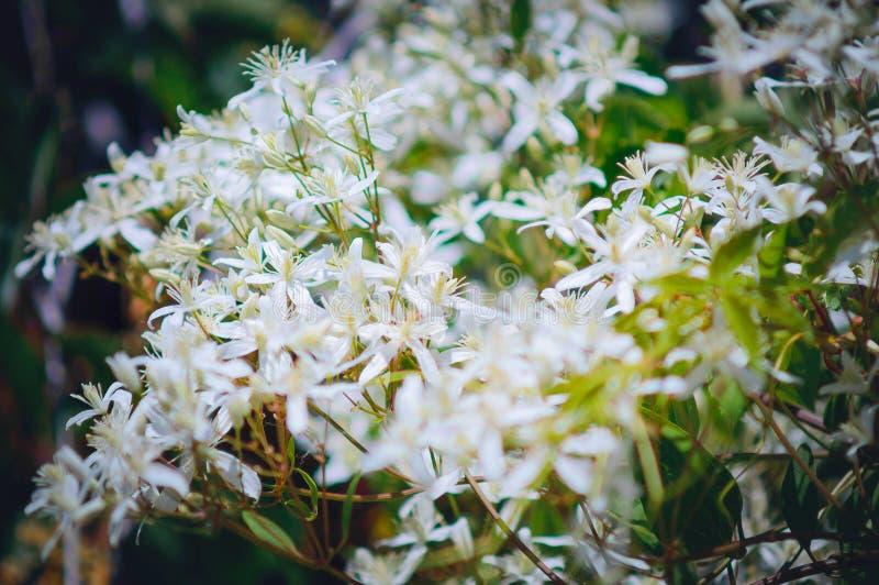 Peque?as flores blancas Fondo hermoso del verano foto de archivo libre de regalías