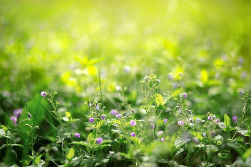 Peque?as flores en la hierba fotografía de archivo