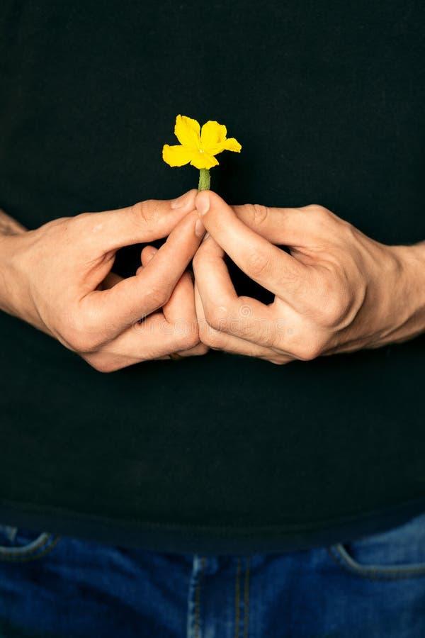 Peque?a flor en las manos masculinas fotos de archivo
