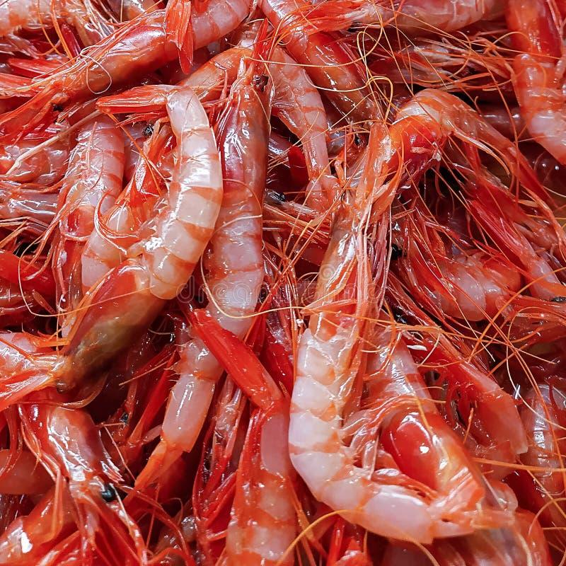 Peque?o camar?n rojo fresco, mariscos, carabinieri Fondo natural foto de archivo libre de regalías