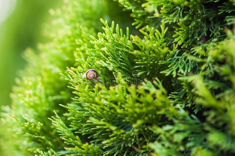 Peque?o caracol que se arrastra en la hoja verde con descensos del agua en un d?a soleado imagen de archivo