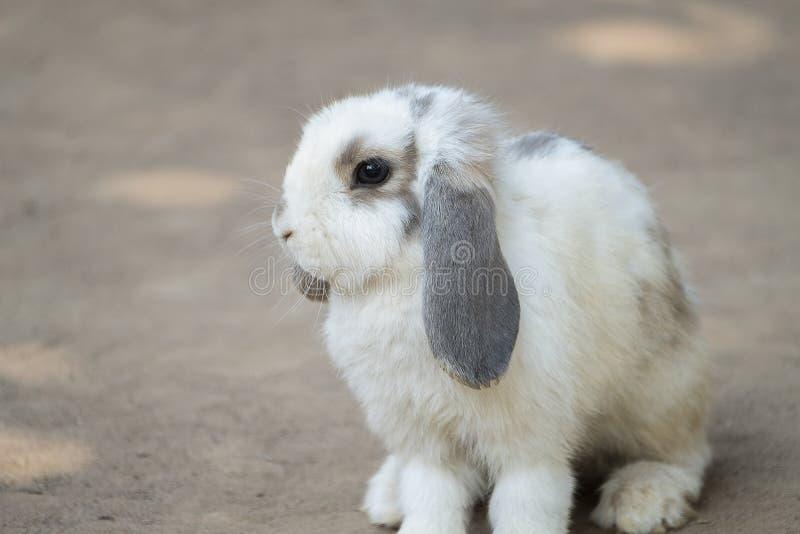 Peque?o conejo lindo imagen de archivo libre de regalías