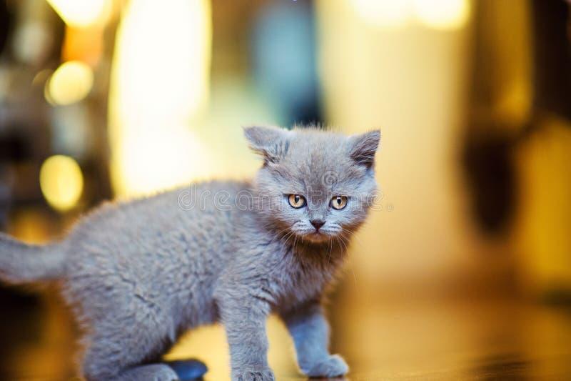 Peque?o gatito divertido imágenes de archivo libres de regalías