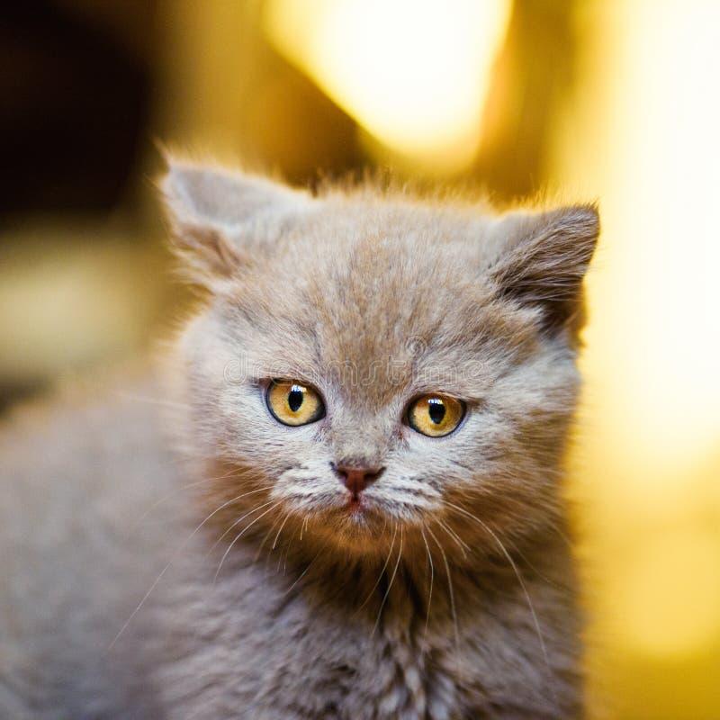 Peque?o gatito lindo fotografía de archivo libre de regalías