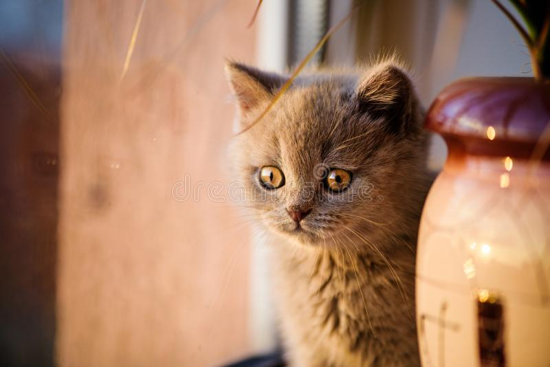 Peque?o gatito lindo foto de archivo