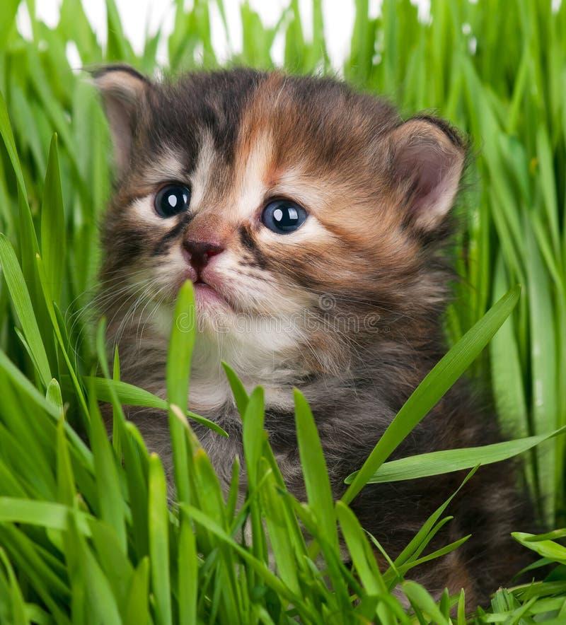 Peque?o gatito lindo foto de archivo libre de regalías
