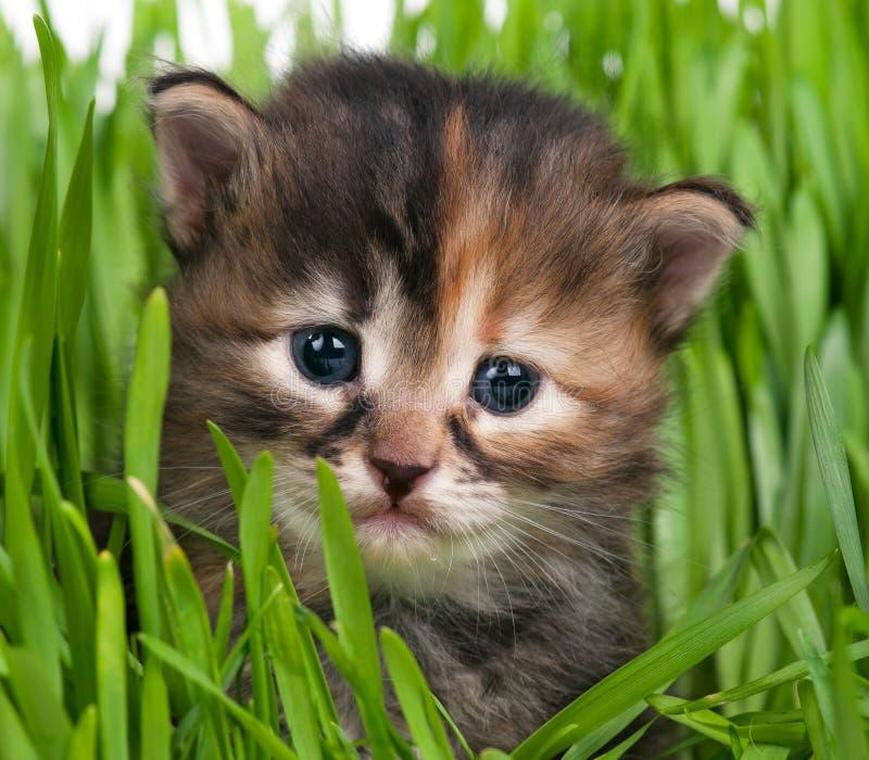 Peque?o gatito lindo imagen de archivo