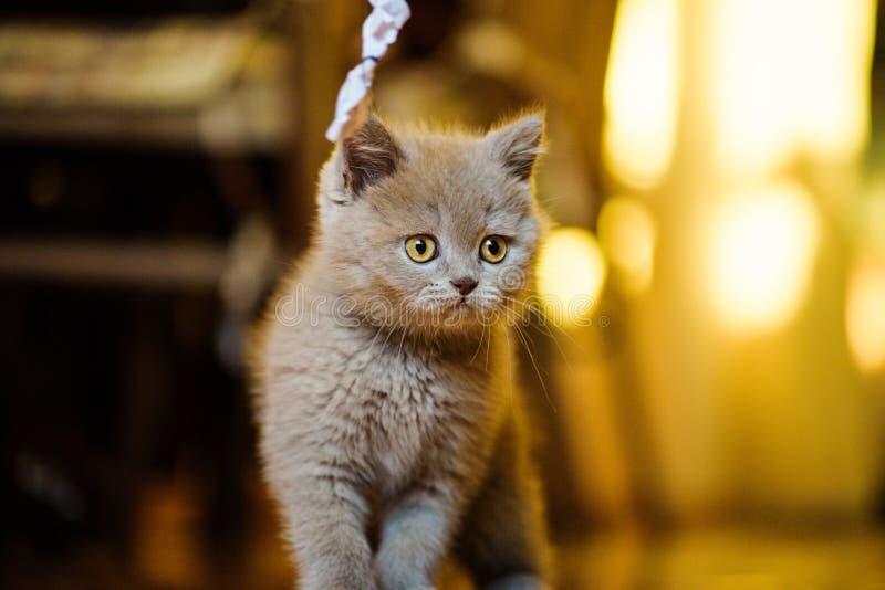 Peque?o gatito lindo fotos de archivo