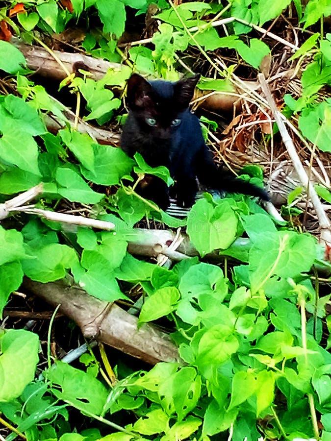 Peque?o gato fotografía de archivo