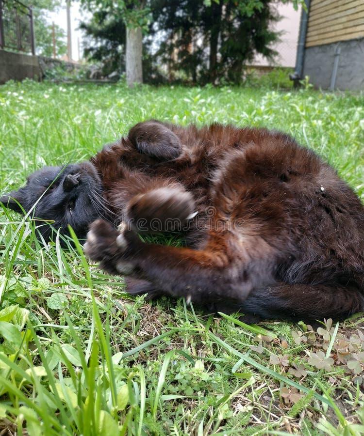 Peque?o gato negro lindo Él apenas quiere divertirse foto de archivo libre de regalías