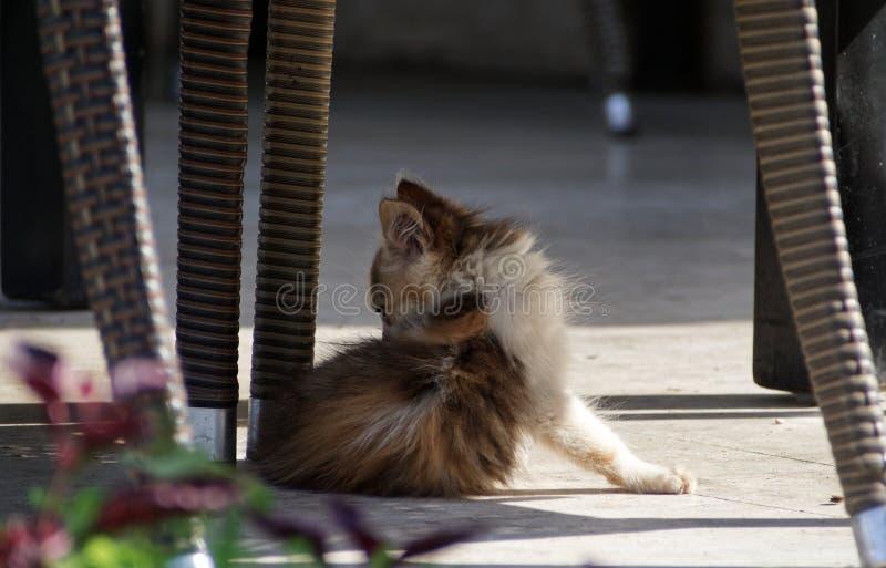 Peque?o gato perdido fotos de archivo libres de regalías