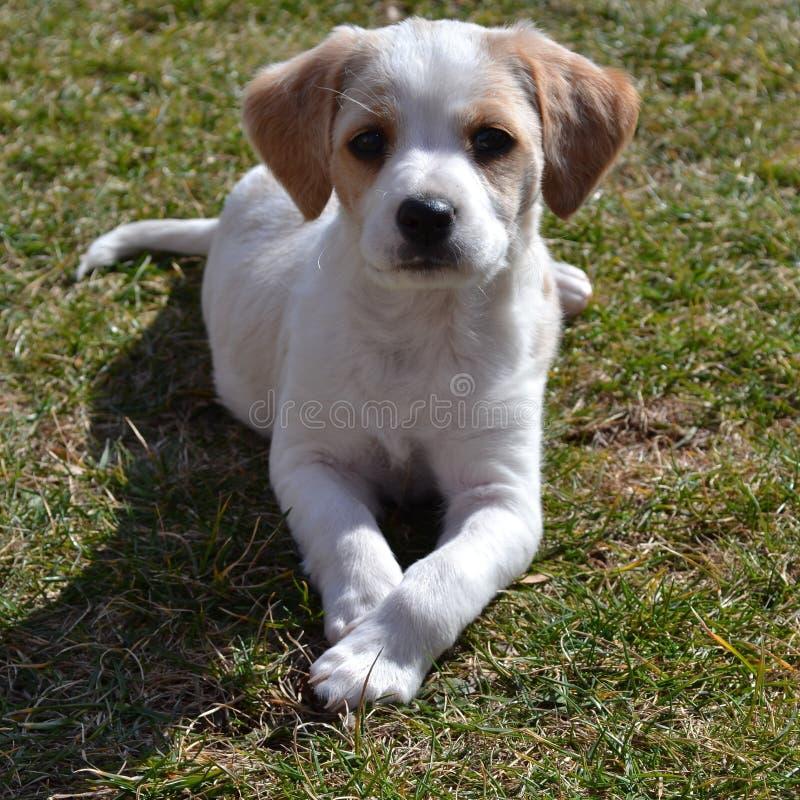 Peque?o perro foto de archivo libre de regalías