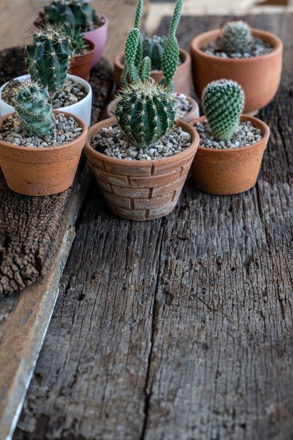 Peque?o suculento, cactus, plantas de tiesto decorativas en la tabla de madera vieja con la luz caliente de la ma?ana imágenes de archivo libres de regalías
