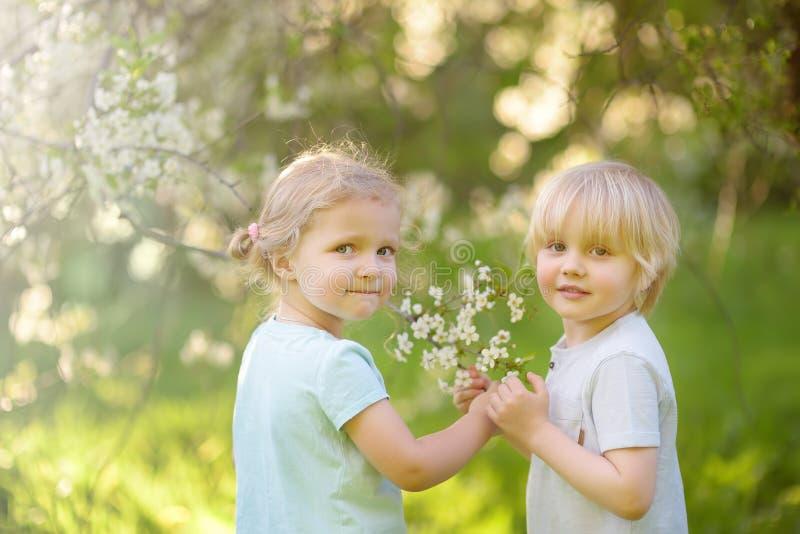 Peque?os ni?os lindos que juegan junto en jard?n floreciente de la cereza fotos de archivo libres de regalías