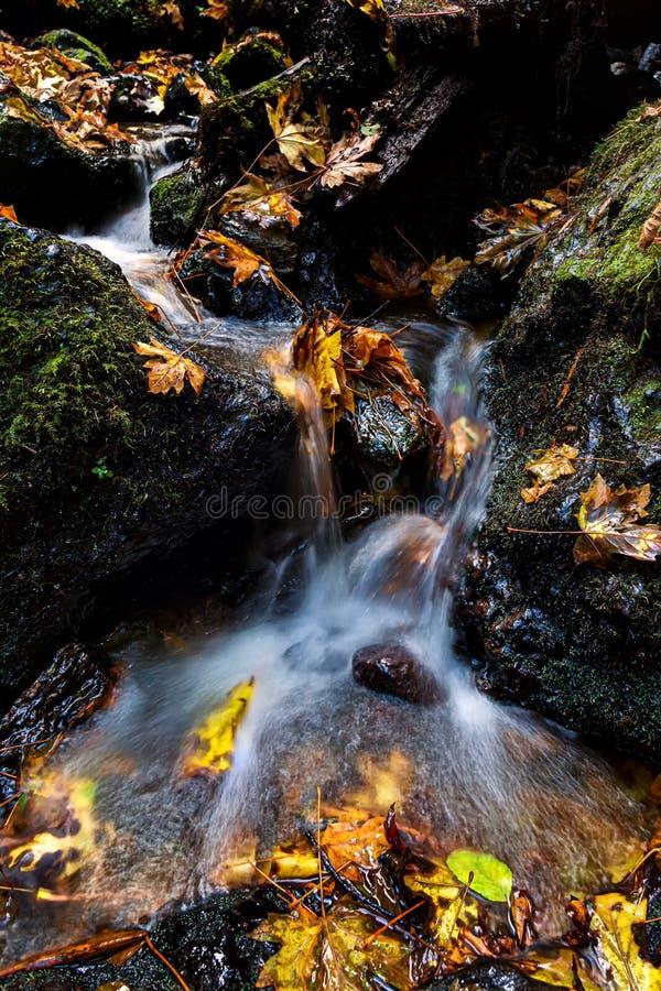 Pequena Cascata e Folhas de Outono, norte da Califórnia imagens de stock royalty free