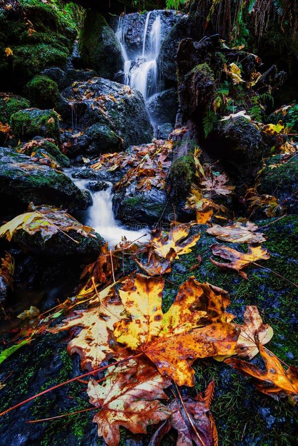 Pequena Cascata e Folhas de Outono, norte da Califórnia imagem de stock royalty free