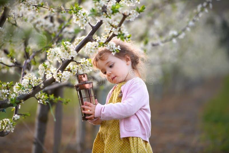 Pequena menina de criança ao ar livre em pomar na primavera, segurando uma lanterna imagens de stock