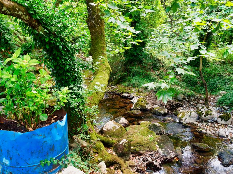 Pequeno Creek Atravessando Jardim foto de stock royalty free