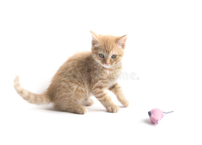 Pequeno gatinho gengibre isolado em fundo branco fotografia de stock