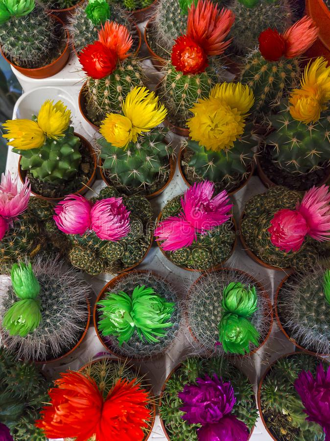 Pequenos cactos multicolorido em pots de visão superior imagem de stock