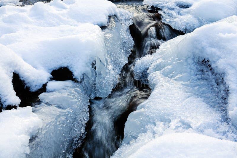 Pequenos congelados creen imagem de stock royalty free