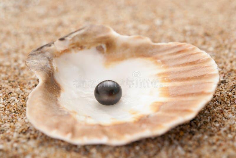 Perła na seashell fotografia royalty free