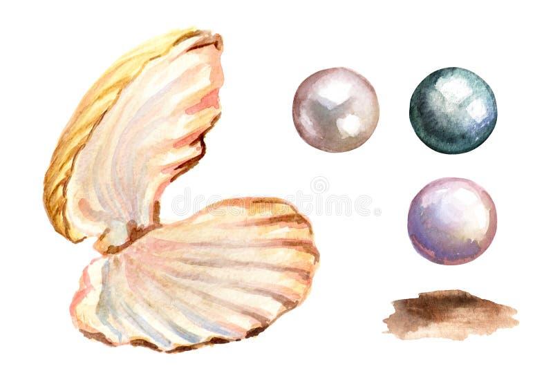 Perły i skorupa set Ręka rysująca akwareli ilustracja na białym tle royalty ilustracja