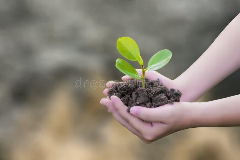 Per la scrittura della scrittura umoristica, ci sono grafici naturali, l'agricoltura, le piantine dell'albero, il verde, il marro immagine stock