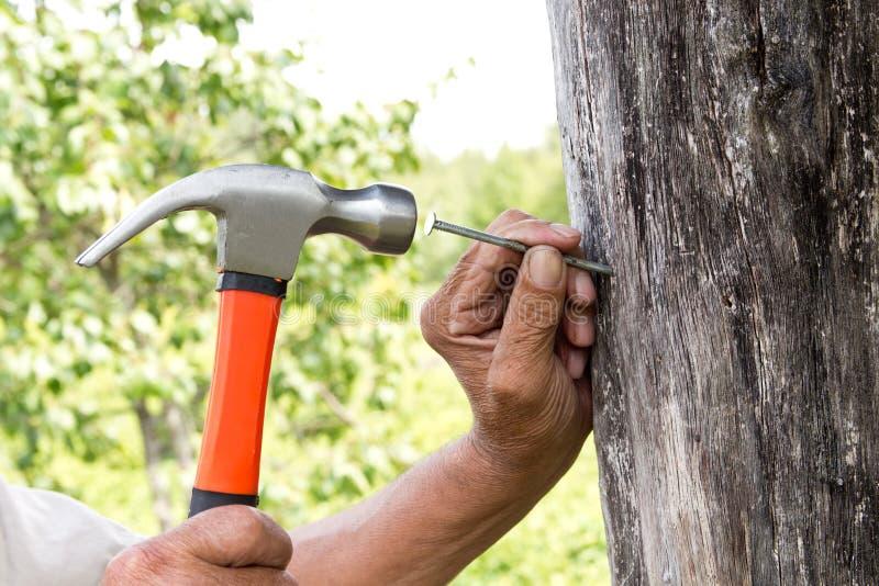 per martellare un chiodo con un martello Carpentiere più anziano del lavoratore fotografia stock