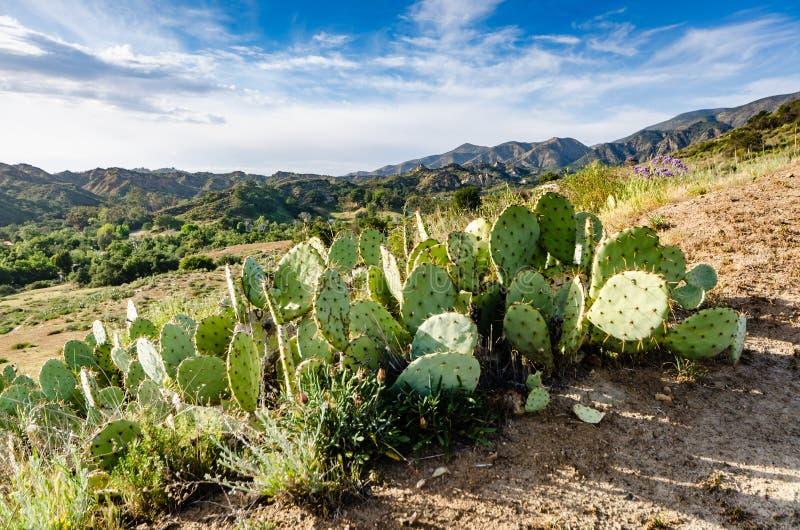 Pera espinhosa - Condado de Orange, Califórnia fotografia de stock royalty free