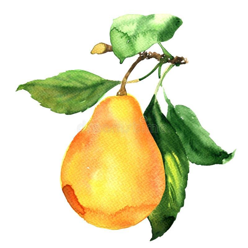 Pera madura fresca con la hoja en la rama aislada, ejemplo de la acuarela ilustración del vector