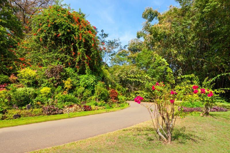 Peradeniya皇家植物园 图库摄影