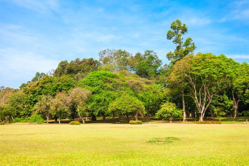 Peradeniya皇家植物园 库存照片