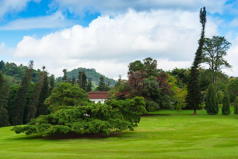 Peradeniya,康提植物园, 图库摄影