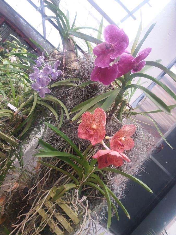 Peradeniya botanische tuin in Sri Lanka royalty-vrije stock fotografie