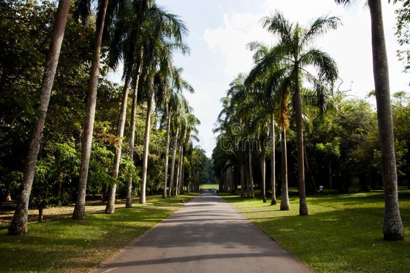 Peradeniya Koninklijke Botanische Tuinen - Kandy - Sri Lanka stock afbeelding