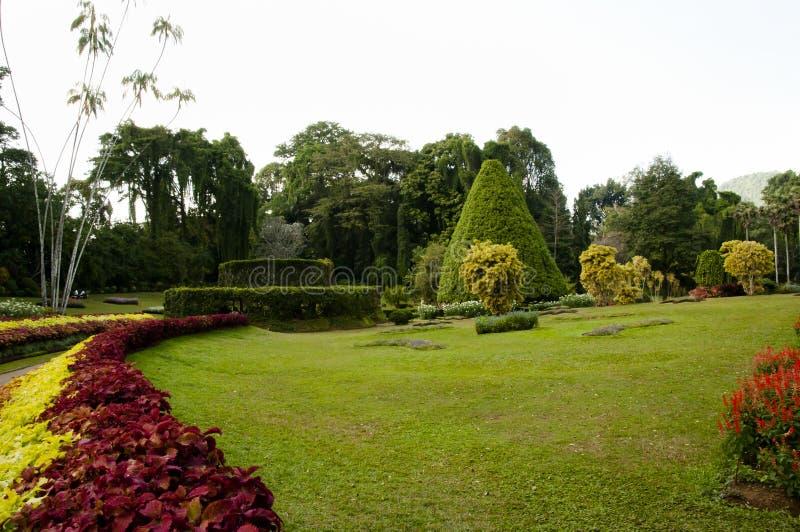 Peradeniya Koninklijke Botanische Tuinen - Kandy - Sri Lanka royalty-vrije stock afbeelding