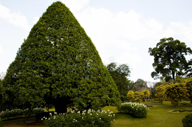Peradeniya Koninklijke Botanische Tuinen - Kandy - Sri Lanka royalty-vrije stock fotografie