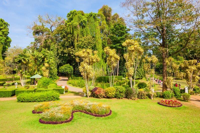 Peradeniya kunglig personbotaniska trädgårdar royaltyfria foton