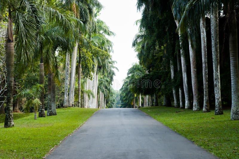 Peradeniya kungliga botaniska trädgårdar - Kandy - Sri Lanka fotografering för bildbyråer