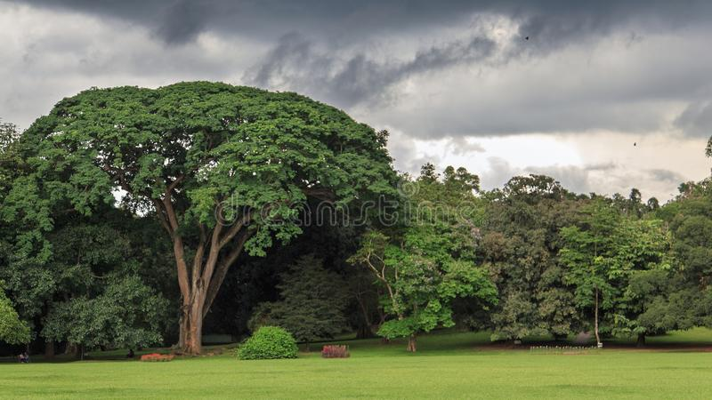 Peradeniya Royal Botanical Gardens - kandy - Sri lanka. Royal Botanic Gardens, Peradeniya are about 5.5 km to the west of the city of Kandy in the Central stock photos