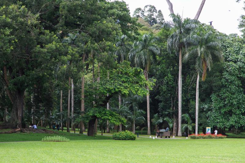 Peradeniya Royal Botanical Gardens - kandy - Sri lanka. Royal Botanic Gardens, Peradeniya are about 5.5 km to the west of the city of Kandy in the Central stock images